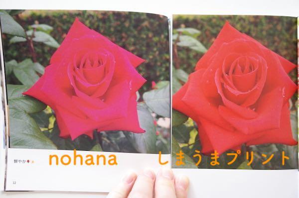 nohanaとしまうまプリントの画質比較(寒色)