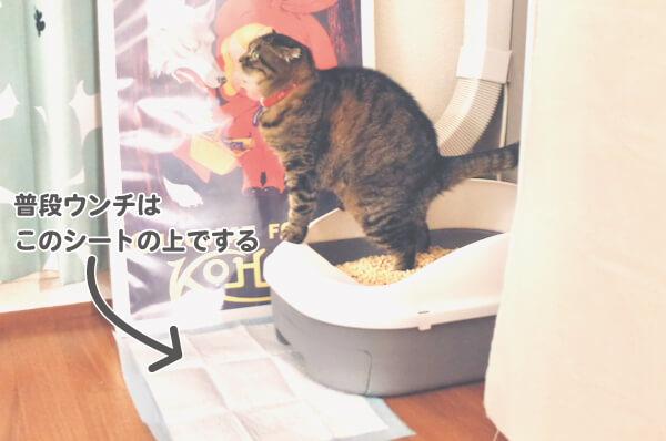 ペティオのシステムトイレでふんばる猫